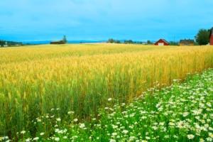 Norsk gård