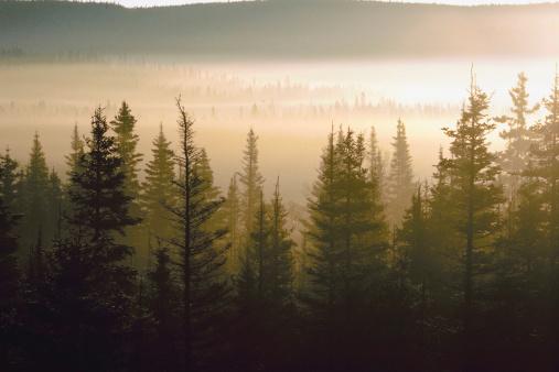 Det ligger mange muligheter i norsk skog.
