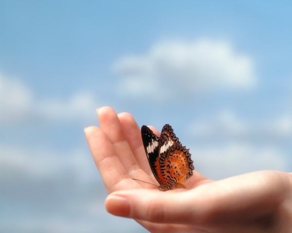 Butterfly sitting in the palm of a hand